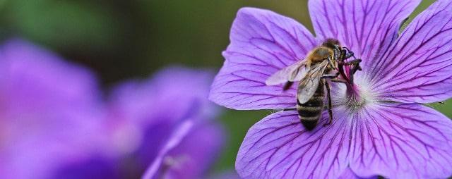 Bienenschmaus unterstützen